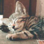 Adottare un gatto: cosa cambia grazie alla Pet economy